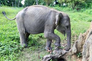 Philip exploring the elephant paddock at CWRC