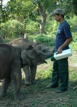 Keeper feeding Philip (front) & Rani (behind)