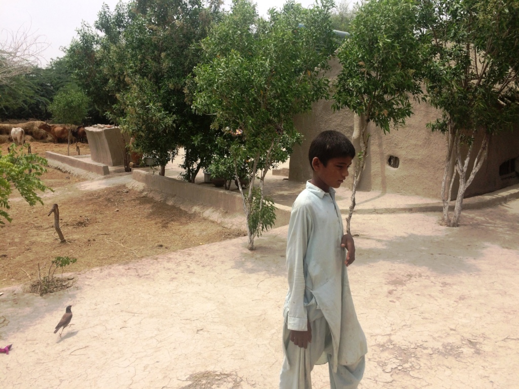Trees palnted at village