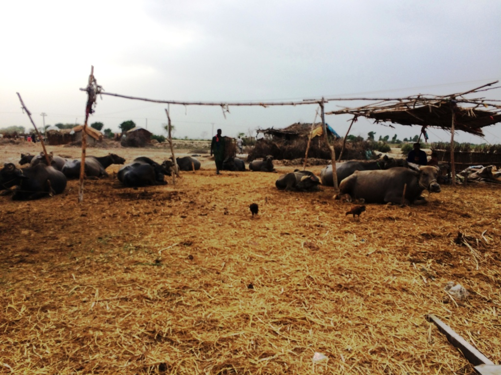 Livestock rearing by household level