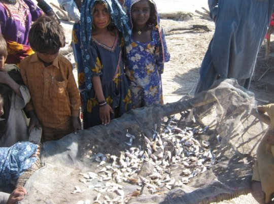 Little children collect small fish near water cour