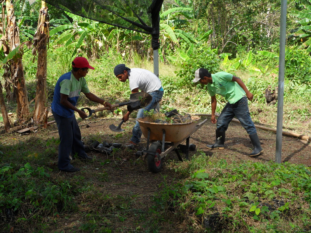 Community members working in the tree nursery