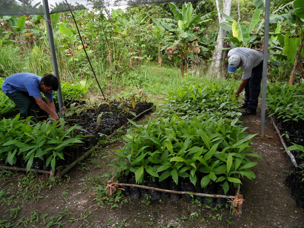Tree nursery in Panama