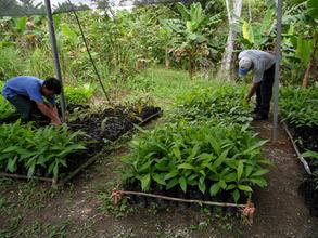 Tree nursery in Panama