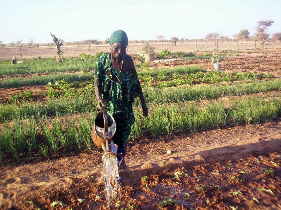 Market gardener in Mali