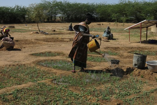 Watering the crops in a new market garden