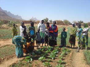 Rainwater Harvesting for Market Gardening