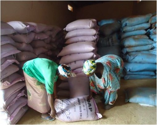 Women receive fertilizer at distribution center