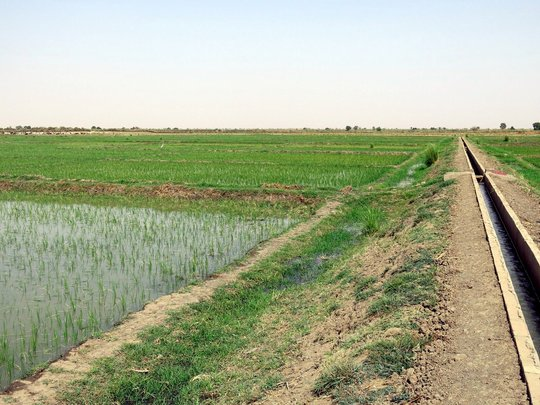 Rice field and Canal 2013