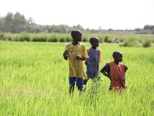 Support Drought and Famine Relief in Mali