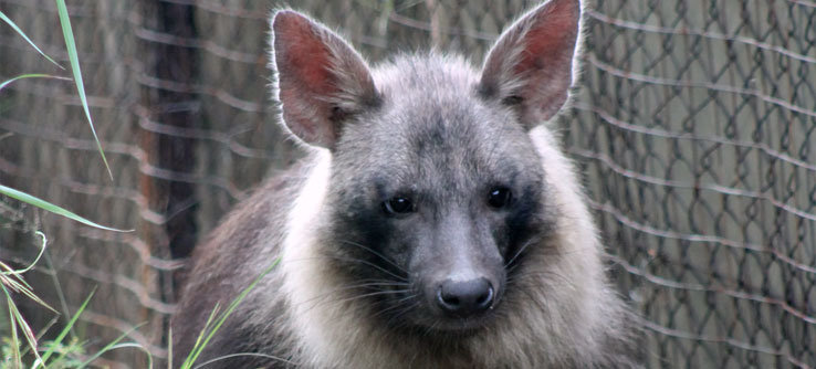 Local landowners often consider hyenas to be pests