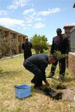 Plant 3,000 trees in Africa