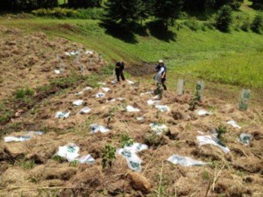 MGBRT planting trees in The Big Scrub Rainforest