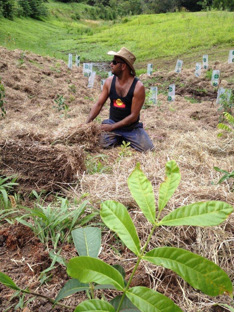 Help Aboriginal Green Team For Australia's Forests