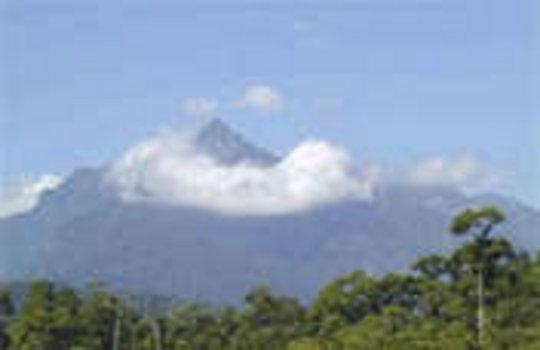 Pico Bonito Carbon Offset Project