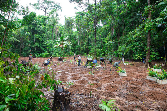 volunteers planting trees you have adopted