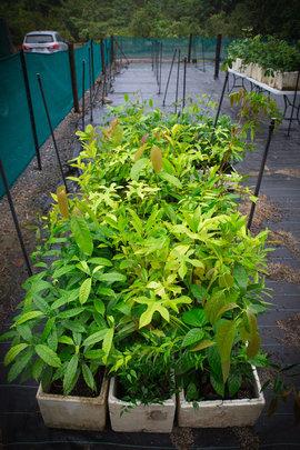 some of the 2000 seedlings grown in 2014