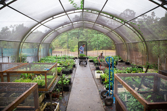 Our productive Daintree nursery
