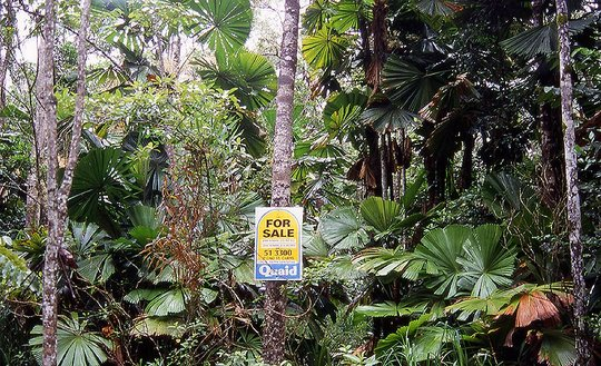 Adopt a Rainforest