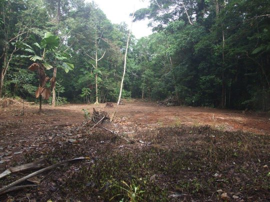 Lot 83 Rosewood road ready for replanting