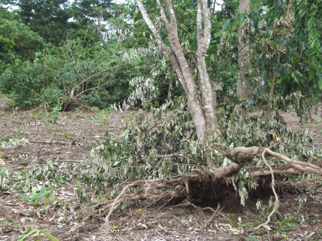The cyclone damage wasn