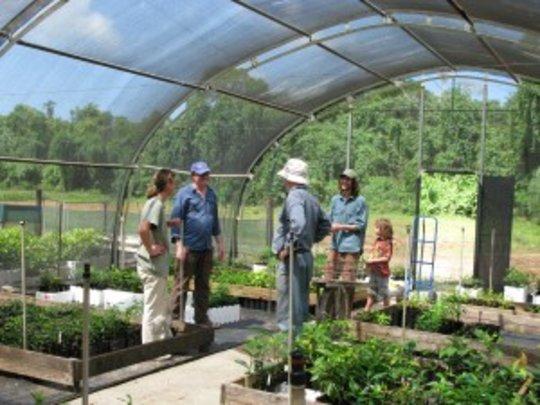 Daintree Rainforest Nursery