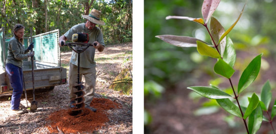 Joe, Basil and a rainforest seedling