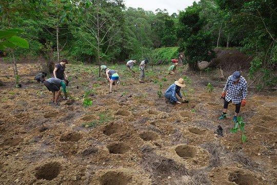 Adopt Vulnerable Rainforest in Australia