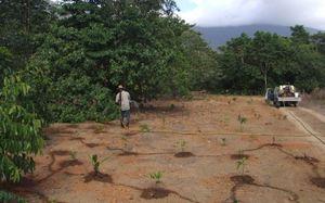 Watering seedlings by hand