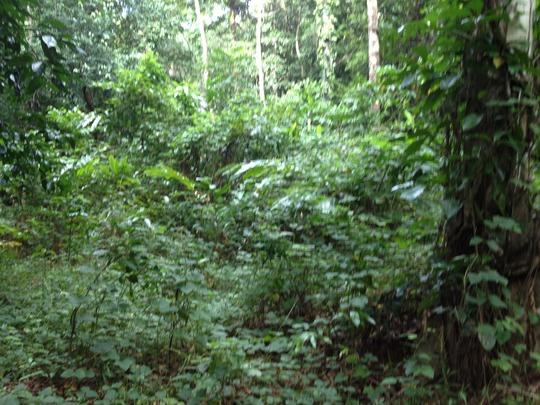 weeds, weeds, weeds - it was a jungle of bramble