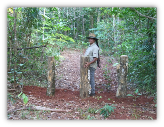 Work at a restoration site, Daintree October 2015