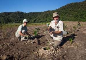 Rainforest Rescue Volunteers planting trees