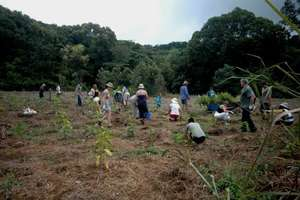 Restoring Cleared Areas