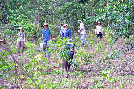 Planting Rainforest Trees