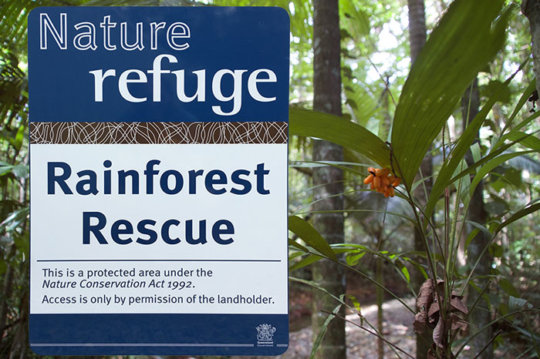 11 New Rainforest Properties Proected Forever