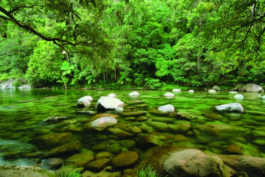 Pristine runoff into Daintree creek systems
