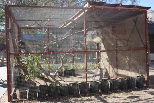 Maya's new enclosure