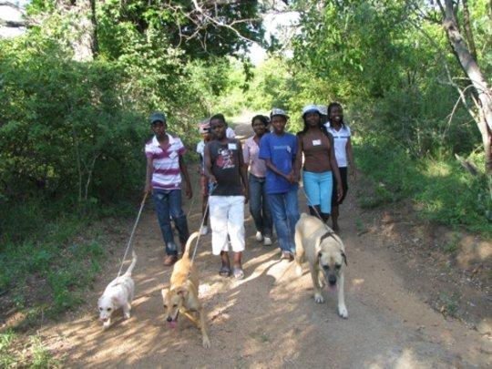 On the Dog walk