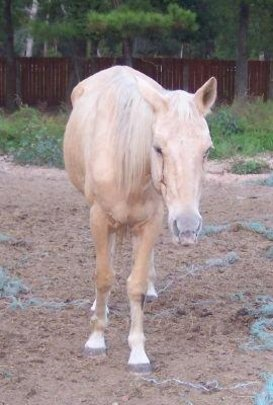 Goldie When She Arrived