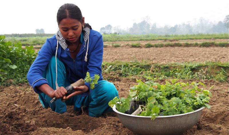 Asmita tills a successful vegetable farm