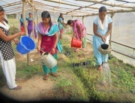 Tending the crops