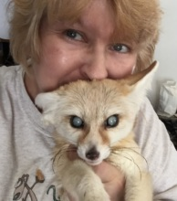 Blind Ivix giving CCM Fennec fox therapy
