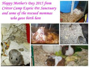 Happy Mother's Day from Critter Camp!
