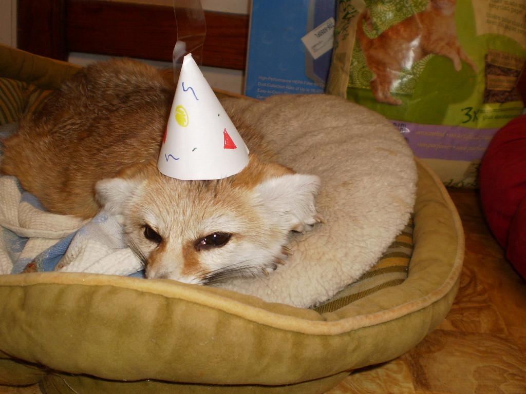 Happy Birthday Quiggly!