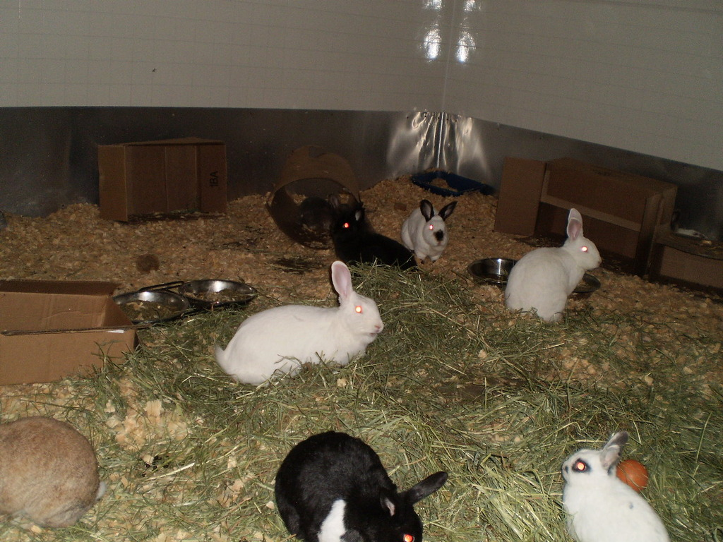 Alice in Bunny Haven with new friends