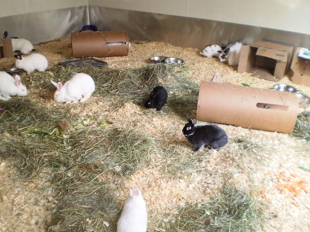 Arabella & friends in Critter Camp