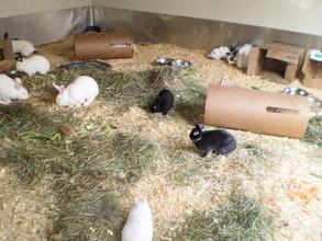 Arabella & friends in Critter Camp's Bunny haven