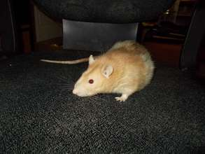 Monster the Ratty