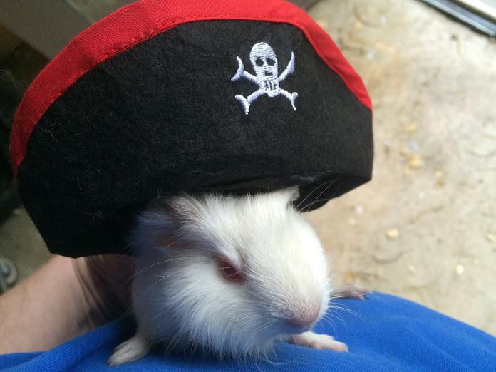 Pirate piggy