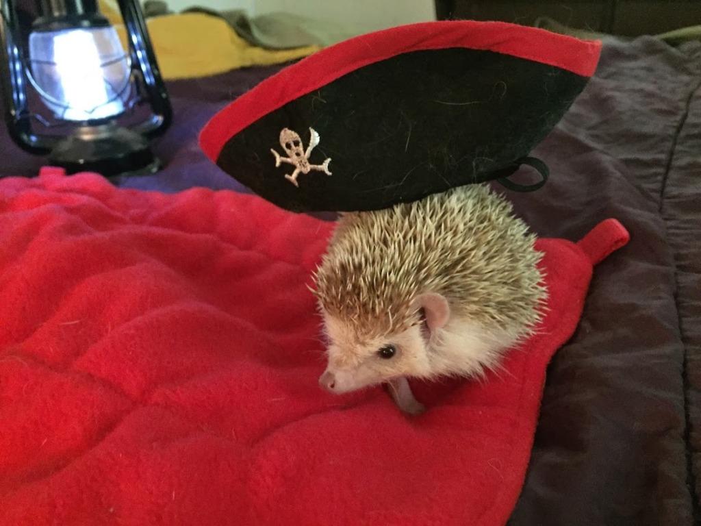 Pirate Buddy
